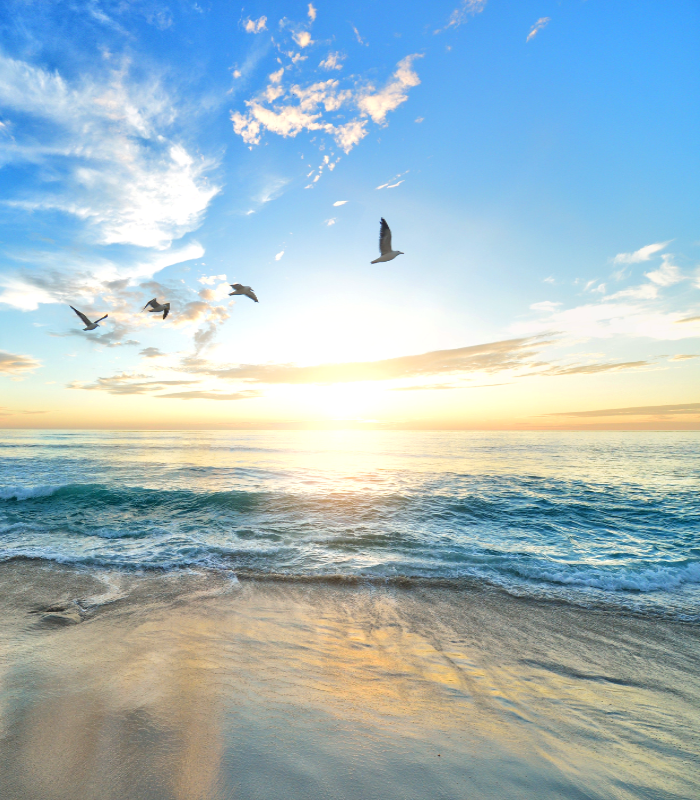 Photo avec mer et envol d'oiseaux pour la page de bienvenue de Transformaction